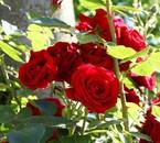 ces fleurs veut dirent combien la vie est belle