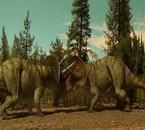 combat de taurosaurus