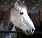 Moon-Grey de bersee le plus GENIAL double poney a mes yeux