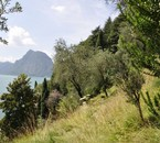 Gandria-Castagnola/ sentier des Oliviers/ Tessin/ © 2011