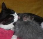 l'amour entre une chatte et une lapine