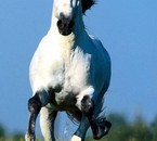 cheval au galop !!