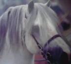 cheval en preparation de concours !!