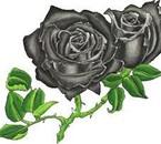 rose gris ou noir?