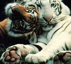 jadore les animaux!!