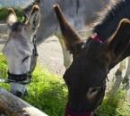 Mes amis, les ânes Ombre et Ramon
