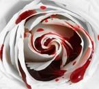 amour pure taché de sang
