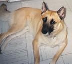 Rocky mon chien