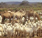 "somali nomade life style ""sow maal"""