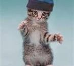 se chat é mignon,joli et rigolo.TOU KOME MOI KOI