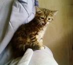 Mon ti chat , Diosa , Caline comme moi ! ! ! !
