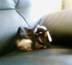 Et mon cochon d'inde , Punky , Toujours speed ! ! ! !