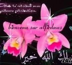 forum macha Allah - venez nous rejoindre !