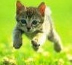 qu'est-ce qu'un chat qui se vente ?? Un matou-vu ! héhéhé!!!