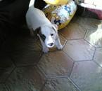 voici mon petit chien qui a tout juste 2 mois