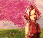 Sakura ! pas tro belle comme ça ?