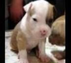 mon chien rosko 2
