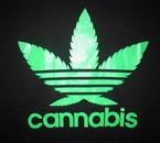 Viva Cannabis