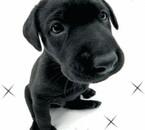 des mini-chien !! xD
