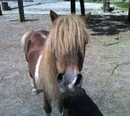 litle pony expres
