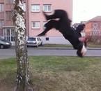salto contre l'arbre