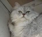mon amour de chat !!