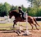 Un cheval qui saute un obstacle 1