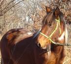 mon bébé d'amour JANVIER 2008