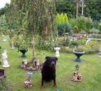 mon chien dans mon jardin