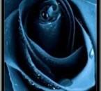 Rose Noire des Ténèbres
