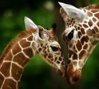 Girafon & maman.
