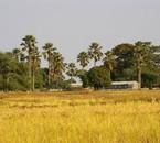 Les paysages africains