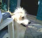 un Vandale, un vrai...mon chien<3