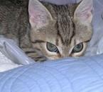 mn cat