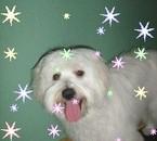 Mon chien Casper