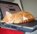 chat qui dort (on a tous besoin de repos)