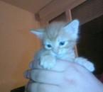 voici nougat notre petit chaton