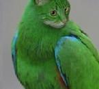 koi vert t 'aime pas ??