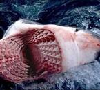 Tro fort ! ! !  Wooooaaaaoooo le nbr de dents !!!!!!!!!!!!