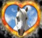 voici un cheval