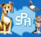 A cause de labandon on dOiit euthanasiier des animaux !!