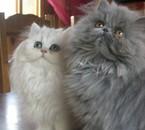 Boréale et Bella-Mia