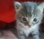 mon bébé chat ^^