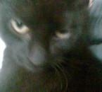 mon ti chat qui est morte elle n avait meme pas 1 an