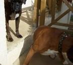 Ma chienne et le chien de G-P