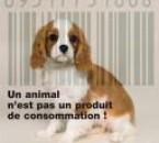L'animal n'est pas un produit de consomation