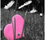 lOve tùsse de bloemetjs !..