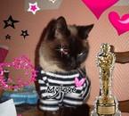 My cat mon BB