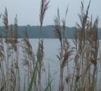Photo nature..