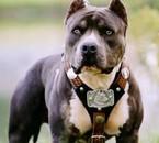 waw belle chien